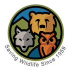 Big Bear Alpine Zoo