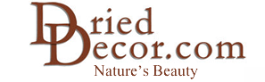 Dried Decor coupon codes