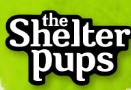 Shelter Pups