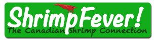 Shrimp Fever Coupons